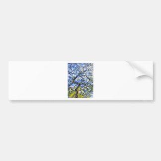 Almond trees bumper sticker