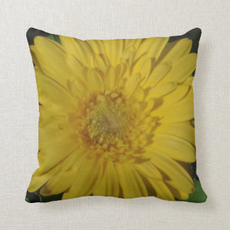 almost solid yellow gerber daisy pillow