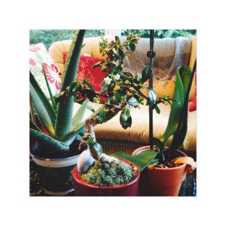Aloe Bonsai Orchid Medley on Canvas Canvas Print