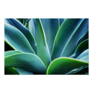 Aloe Leaves Poster
