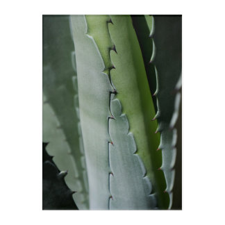 Aloe - Macro Fine Art Photograph