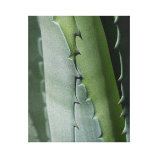 Aloe - Macro Fine Art Photograph Canvas Print