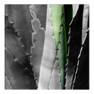 Aloe - Macro Fine Art Photograph in Black & White