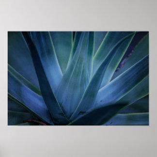 Aloe Plant Poster