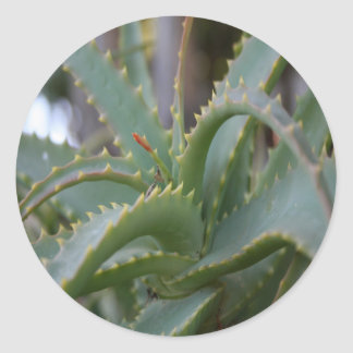 Aloe Vera Leaves Classic Round Sticker