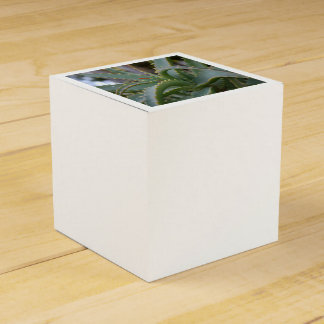 Aloe Vera Leaves Favour Box