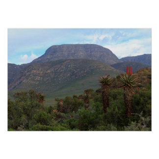 Aloe Vera Mountain Scenery Poster