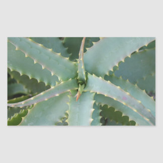 Aloe Vera Rectangular Sticker