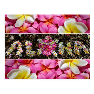 Aloha Honu Turtle Hawaii Plumeria Flower Paradise Postcard
