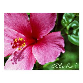 Aloha! Pink Hibiscus Postcard
