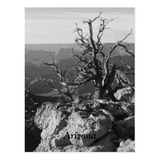Alone in Arizona Postcard