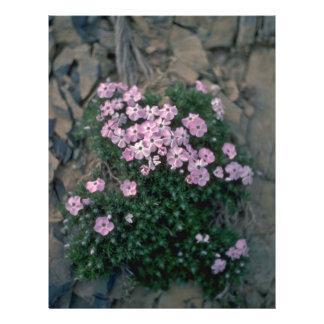 Alone Plant 21.5 Cm X 28 Cm Flyer