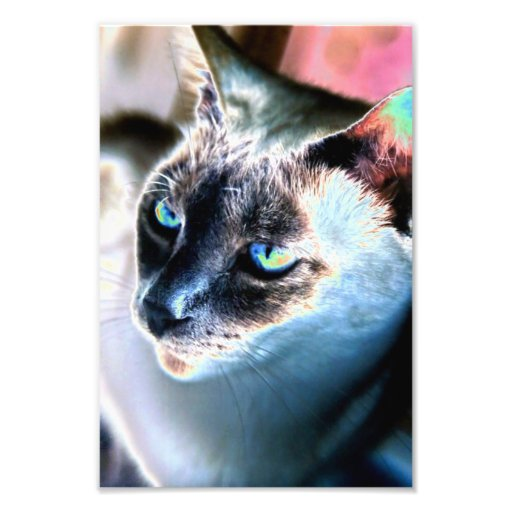 Aloof Siamese Cat Altered Photo Print
