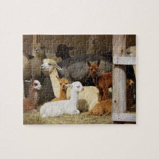 Alpaca Barn Photo Puzzle