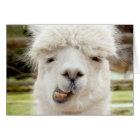 Alpaca Funny Face Card