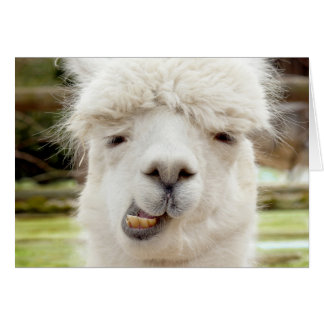 Alpaca Funny Face Greeting Card
