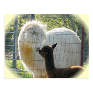 Alpaca Kisses Postcard