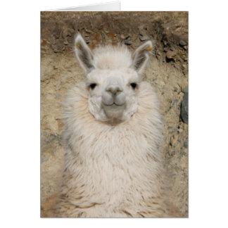Alpaca Llama Close up - Head Profile Card