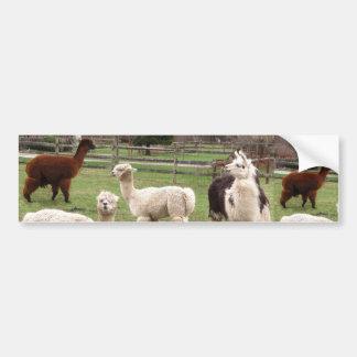 Alpaca Melange ~ Bumper Sticker