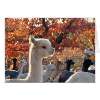 Alpaca Note Cards Elisabetta