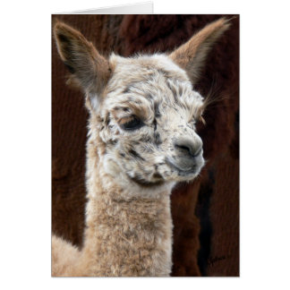 Alpaca of Many Colors Card