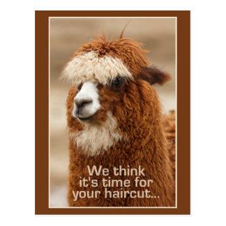 Alpaca postcard