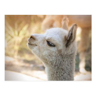 Alpaca Postcard Celeste