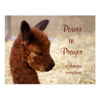 Alpaca Prayer Postcard