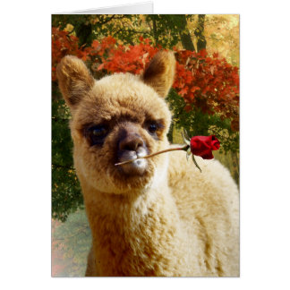 Alpaca Rose Note Cards