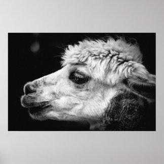 Alpaca side-view portrait poster