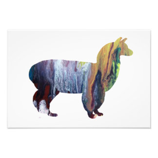 Alpaca silhouette photo print