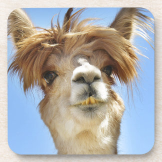 Alpaca with Crazy Hair Coaster
