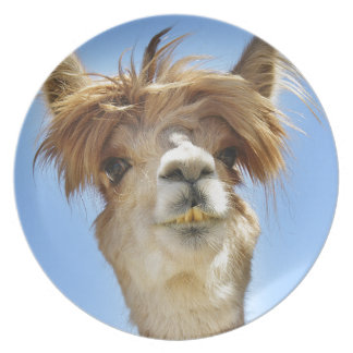 Alpaca with Crazy Hair Party Plate