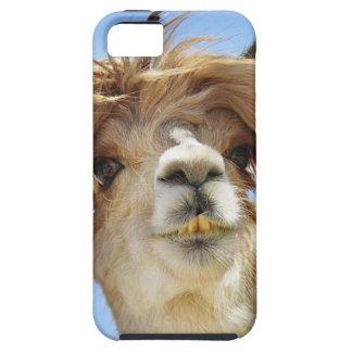 Alpaca with Crazy Hair Tough iPhone 5 Case