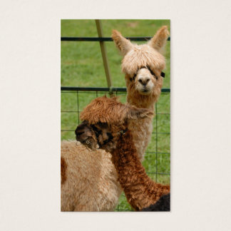 Alpacas Business Card