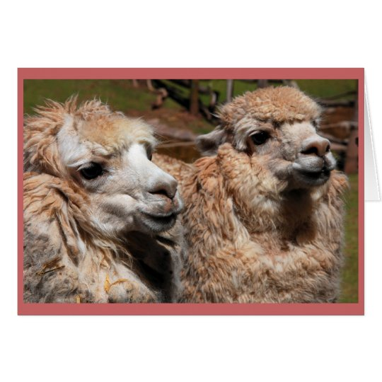 """""""Alpacas"""" Card"""