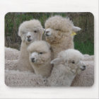 Alpacas Closeup Mouse Pad