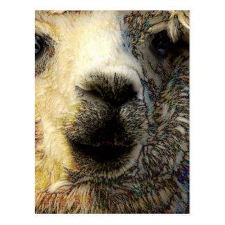 Alpaka greets you world-wide postcard