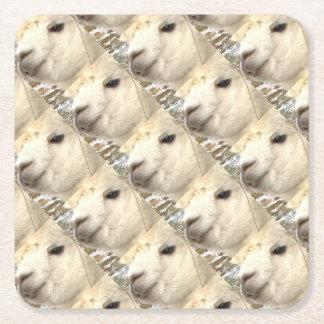 Alpaka knows square paper coaster