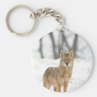 Alpha Male Coyote Key Ring