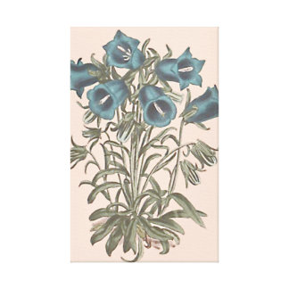 Alpine Bell Flower Botanical Illustration Canvas Print