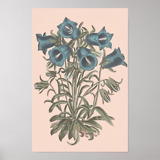 Alpine Bell Flower Botanical Illustration Poster