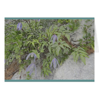 Alpine clematis card