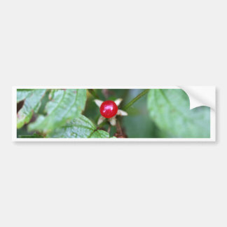 Alpine currant (Ribes alpinum) Bumper Sticker