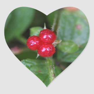 Alpine currant (Ribes alpinum) Heart Sticker