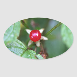 Alpine currant (Ribes alpinum) Oval Sticker