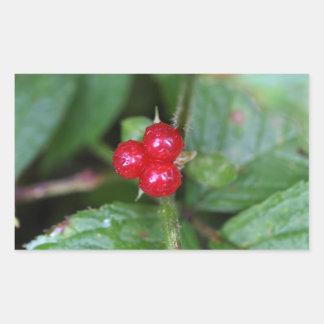 Alpine currant (Ribes alpinum) Rectangular Sticker