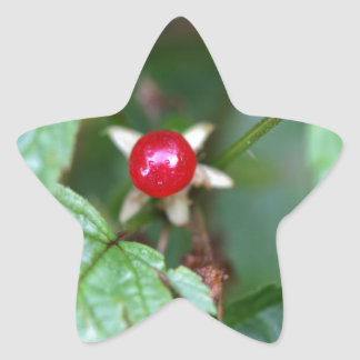 Alpine currant (Ribes alpinum) Star Sticker
