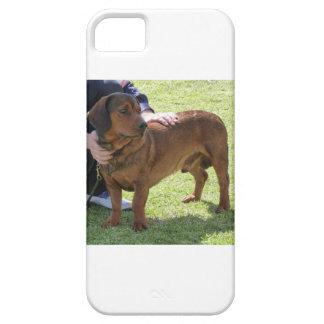 Alpine Dachsbracke Dog Case For The iPhone 5