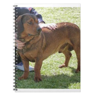 Alpine Dachsbracke Dog Notebook